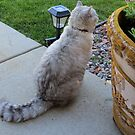 Kitty Sitting Pretty by kkphoto1