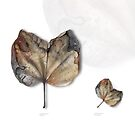Leaf Exhibit I by © Karin Taylor