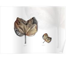 Leaf Exhibit I Poster