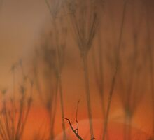 Spirit of the Land © Vicki Ferrari by Vicki Ferrari