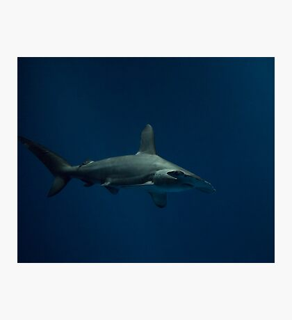 Donnie Sharko Photographic Print