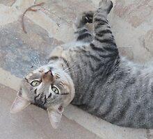 Upside-down cat by Caroline Clarkson