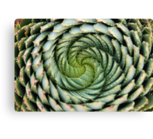 spiral aloe - lesotho's endangered species Canvas Print