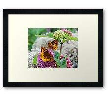 Great Spangled Fritillary Butterflies Framed Print