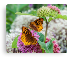 Great Spangled Fritillary Butterflies Canvas Print