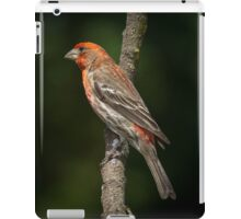 House Finch iPad Case/Skin