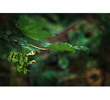 Mapple tree flower Photographic Print