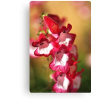 Penstemon Flowers Canvas Print