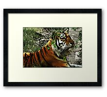 Inquisitive Tiger Portrait Photography Framed Print