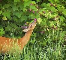 Deer Nibbling Wildflowers by Yannik Hay
