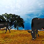 cows in the paddock by Mark Malinowski