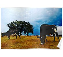 cows in the paddock Poster