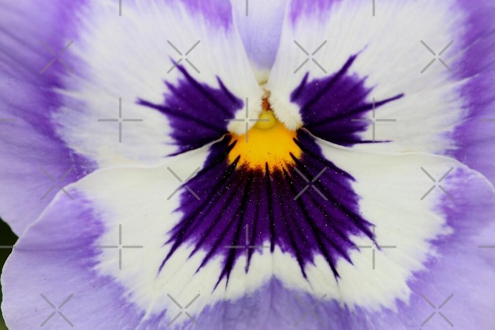 Viola - JUSTART © by JUSTART