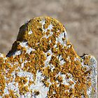 Tombstone with Yellow Lichen by Gilda Axelrod