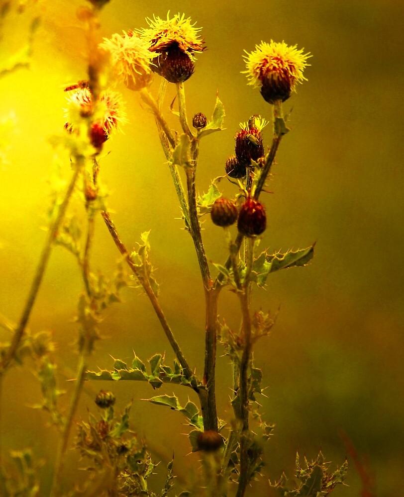 SUNSHINE IN SCOTLAND by leonie7