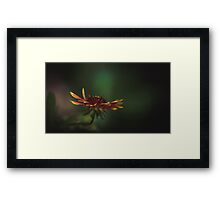 Yellow flower in sunlight Framed Print