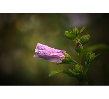 Pink flower with raidrops Photographic Print