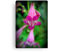 Canyon Penstemon Canvas Print