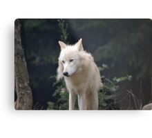 Grand Méchant Loup d'Arctique Metal Print