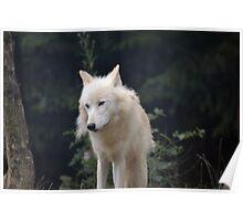 Grand Méchant Loup d'Arctique Poster