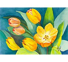 Tulips in Bloom Photographic Print