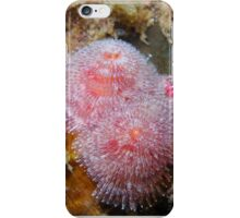Pink Christmas Tree Worms iPhone Case/Skin