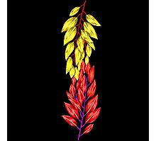 Yellow & Red Leaves Photographic Print