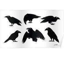 Bird Brains Poster