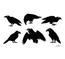 Bird Brains Photographic Print