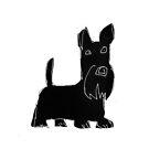 Scottish Terrier by Matt Mawson