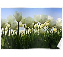 Between the Tulips Poster