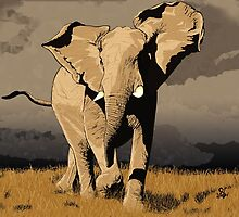 The Elephant's Marching by ciaca