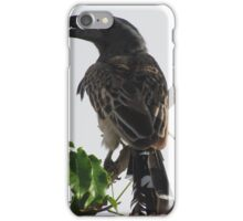 Hornbill, Somalia iPhone Case/Skin