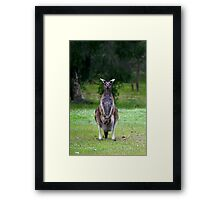 Photogenic Kangaroo with Joey in Pouch Framed Print