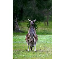 Photogenic Kangaroo with Joey in Pouch Photographic Print