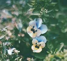 Vintage Pansy by Indea Vanmerllin
