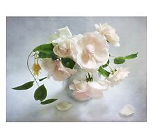 Pale Pink Vintage Roses Still Life Photographic Print