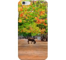 Scenery at the Tiger Temple in Kanchanaburi, Thailand iPhone Case/Skin
