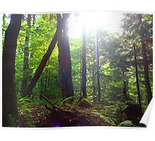 Early Morning Light in the Woods  Poster