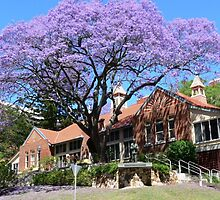 Jacaranda tree, Australia by PhotosByG