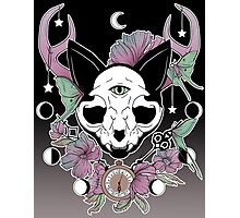 Twilight -- Skull Cat Photographic Print