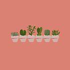 Cacti & Succulent  by Vicky Webb