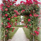 A gate of roses by Thea 65
