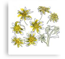 Manx #3 - Scruffy Yellow Metal Print