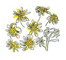 Manx #3 - Scruffy Yellow Photographic Print