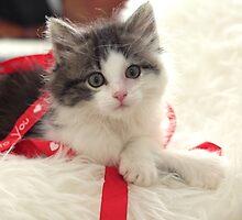 Kitten Love by Pamela Jayne Smith