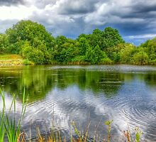 The Pond by Ian Manton