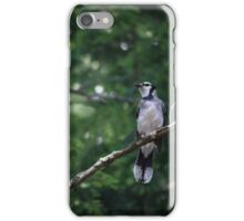 bluejay perched on a tree branch dark green background iPhone Case/Skin