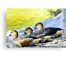 We Ducks Three Canvas Print