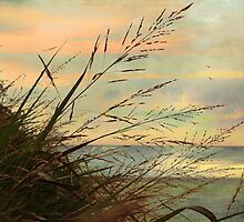 A Musical Sunset  by Susan Werby